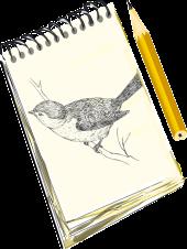 notebook-paper-pencil-drawing-sketch-bird-draw