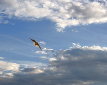 bird_in_flight
