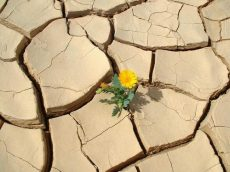 flower_in_desert
