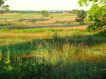 summer-fields-at-gettysburg-nmp