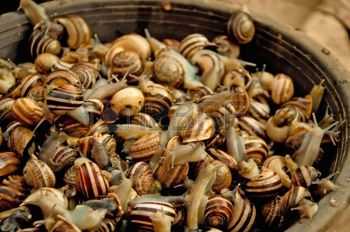 18674326-live-edible-snails-in-a-brown-basket