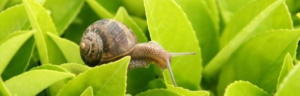 garden-snail_200-623x200