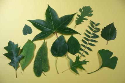 leafrub5